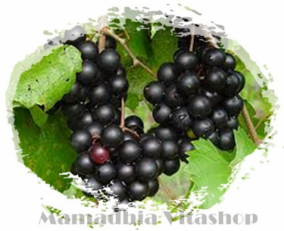 Anggur Muscadine, Anti-penuaan, resrevatrol