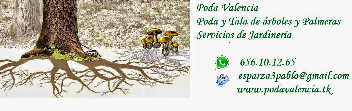 PodaValencia,  Arboristas y Arboricultores, Guardianes de los Arboles.