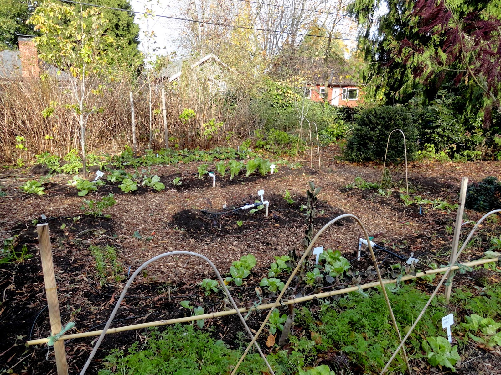 Robins Kitchen Garden City Danger Garden November 2014
