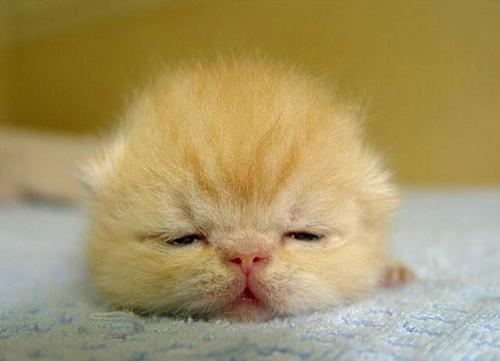 funny baby animals - photo #8