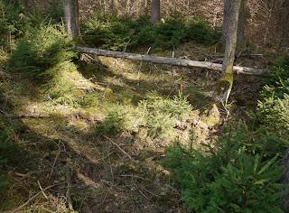 Bild 7: Grabhügel im Forstenrieder Park