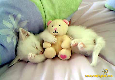 sleeping white kitten with small beige teddy bear
