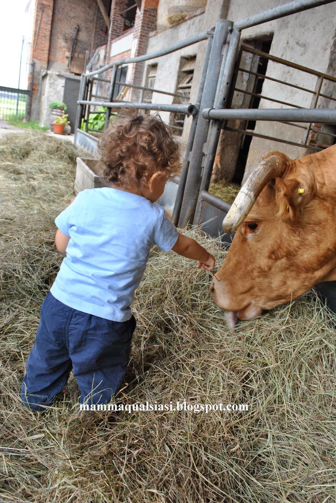 Una mamma qualsiasi chicharito alla scoperta degli animali for Porte francesi della fattoria
