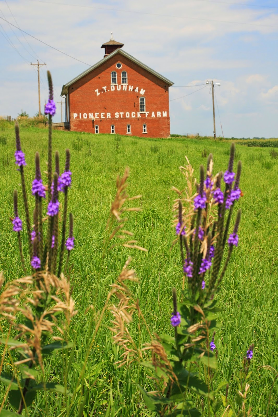 Iowa barn and wildflowers