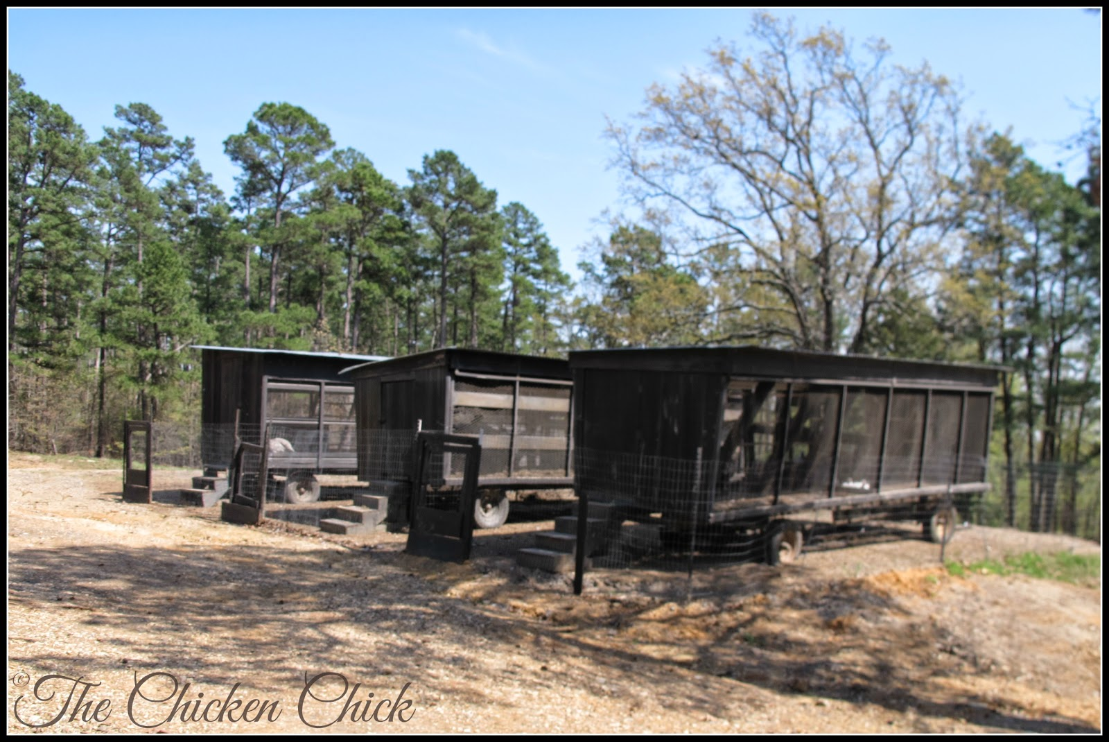 Chicken tractors, formerly cotton trailers, were the chickens' accommodations prior to construction of the chicken barn at P Allen Smith's Moss Mountain Farm