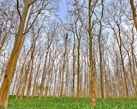 Penyesuaian Diri Tumbuhan Terhadap Lingkungan
