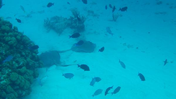underwater camera, underwater photos, cayman islands