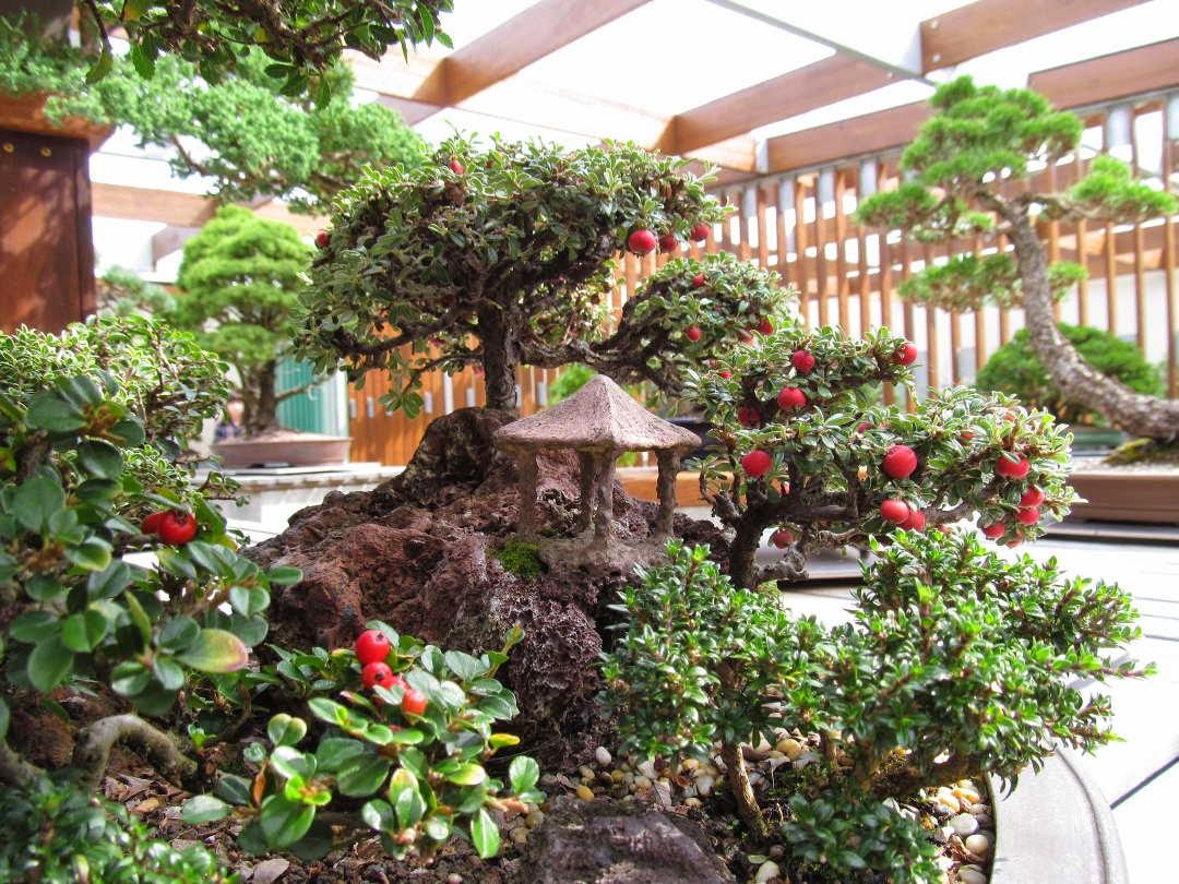 PhyloBotanist Australia39s National Arboretum Part 2 Bonsai