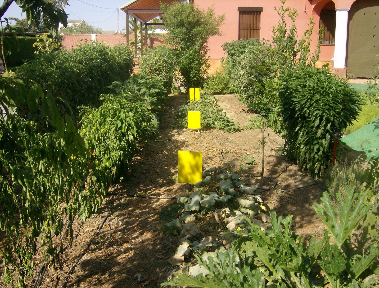 El huerto del lopez lucha ecol gicas contra la mosca blanca for Plantas beneficiosas para el huerto