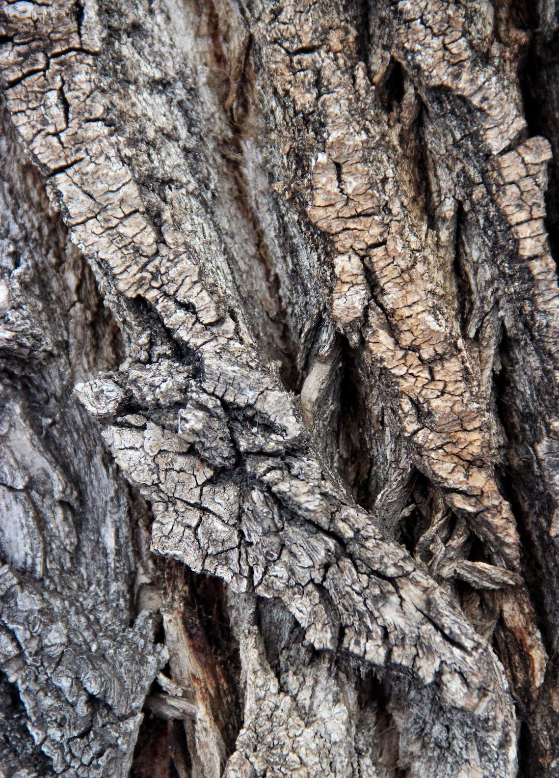 In the Company of Plants and Rocks: Tree-following: Bark