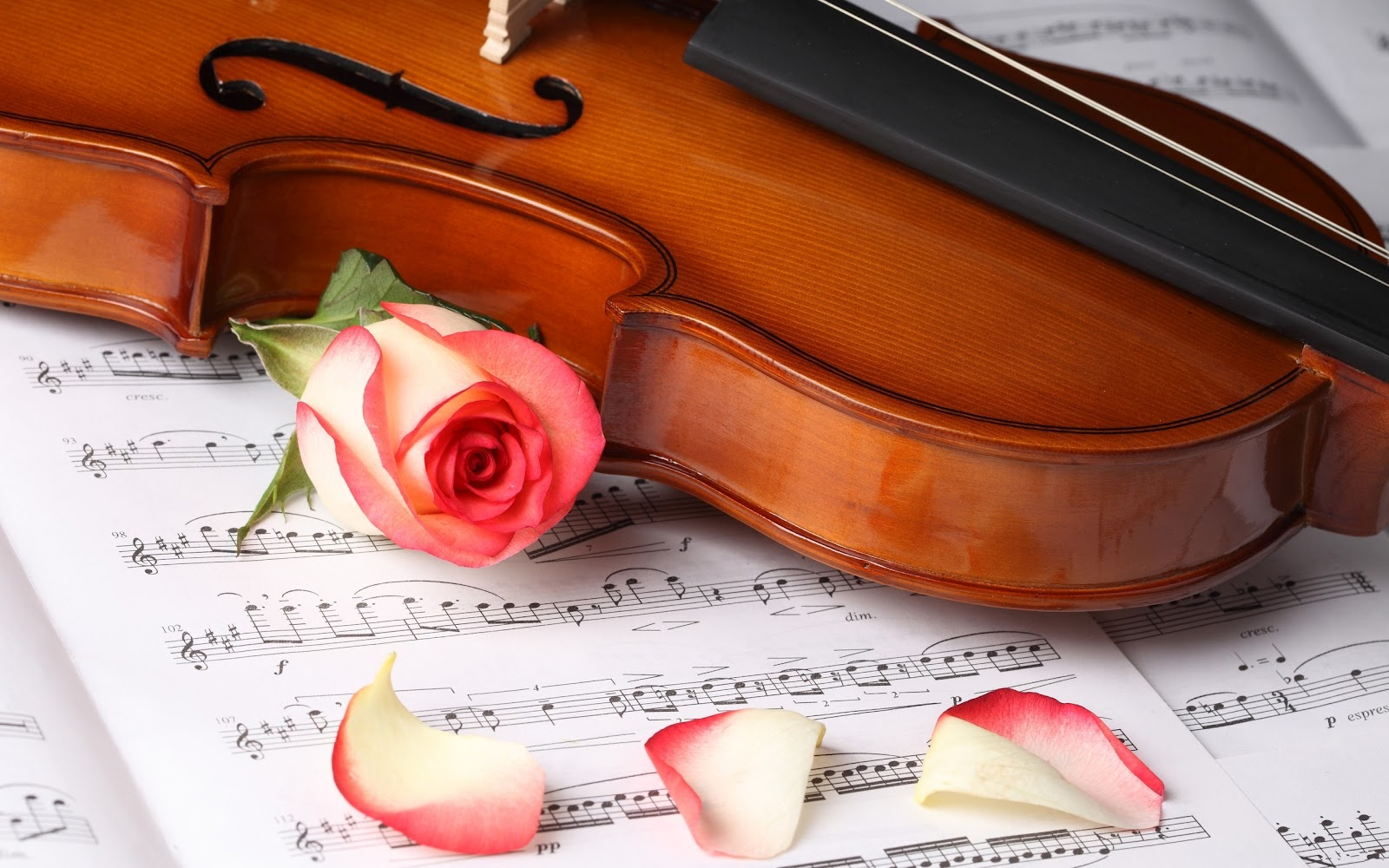 best violin with rose wallpaper