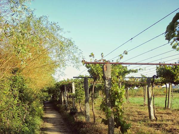 Dia 4 – Etapa 3: Portela (Albergue de Barro) - Pontecesures | ~26km