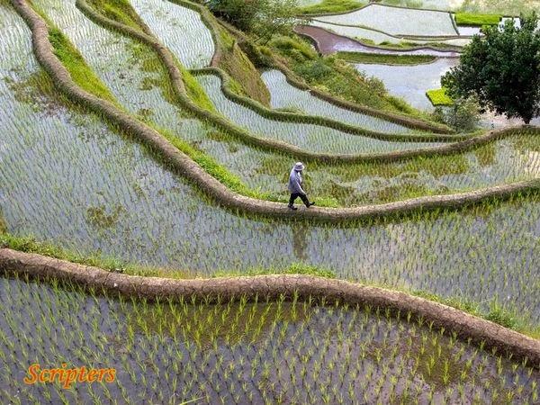 Sawah Padi Lereng Bukit Yang Menakjubkan Di Filipina