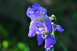 Eine 'Blaue Blume'...^^