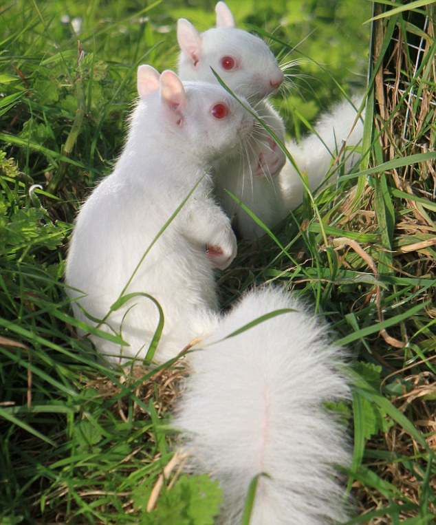 The News For Squirrels: Albino Squirrel