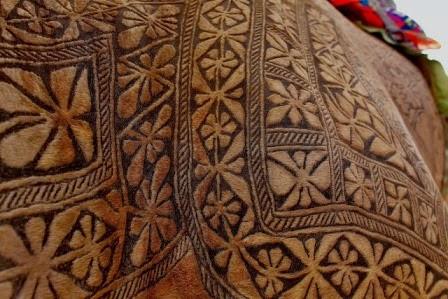 Indahnya Tatoo di badan unta ini....!!!