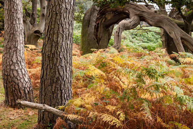 Autumn ferns at Margam Park in South Wales by Martyn Ferry Photography
