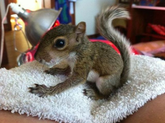 funny animal pics, animal photos, baby squirrel