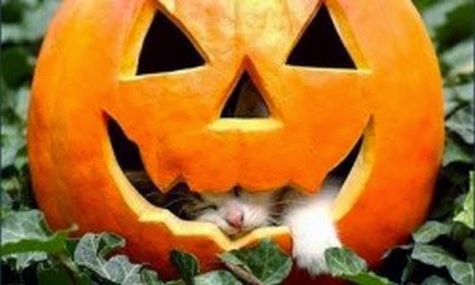 Funny halloween animals2-9