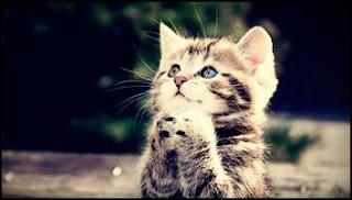 kucing-comel