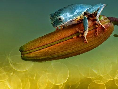 16-Wil-Mijer-Frog-Macro-Photography-www-designstack-co