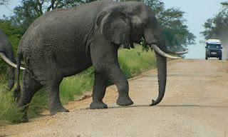 7-Day Uganda Super Safari: Lake Mburo ,Bwindi Impenetrable , Queen Elizabeth  and Kibale Forest National Park