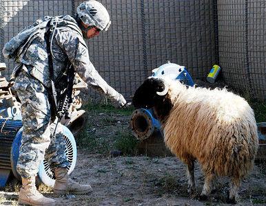 Por negligencia el Senado de EE.UU. legaliza la zoofilia en el Ejército Sold_anim