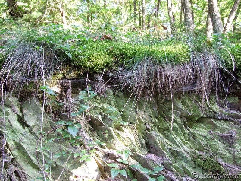 Waldweg Mittelrheintal
