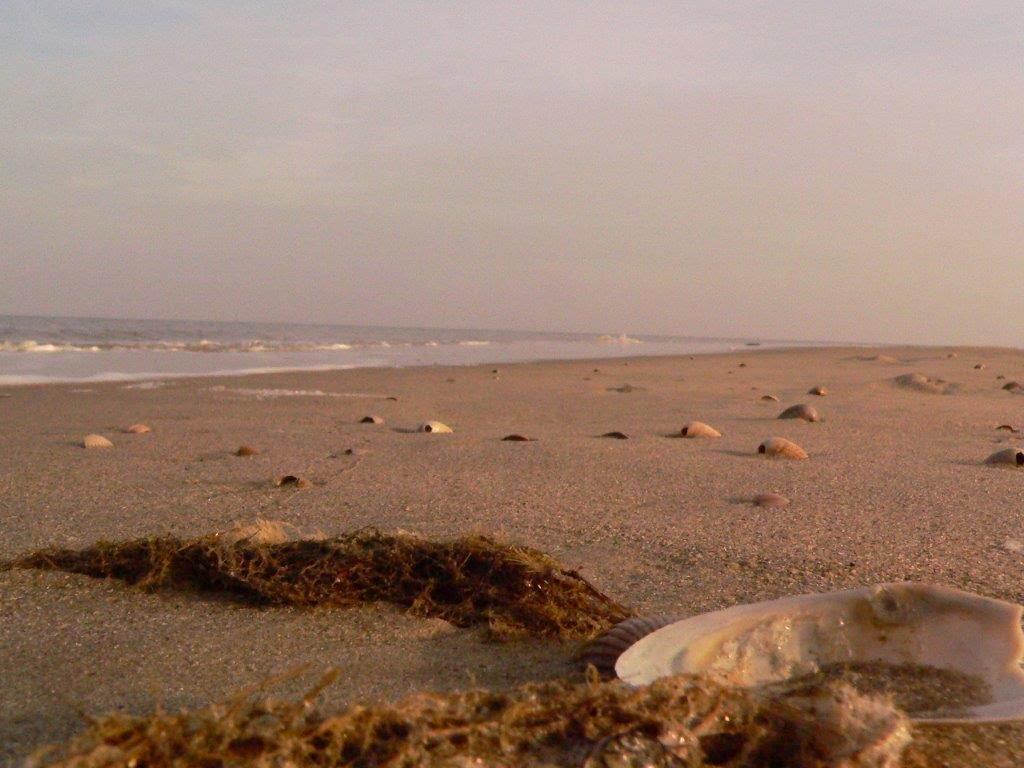 Wochenende Winter Urlaub Insel Meer Strand Sand Muschel Wellen