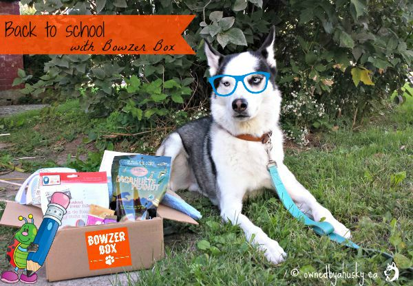Bowzer Box monthly dog subscription box