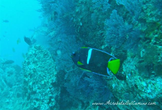 buceo en isla gorgona