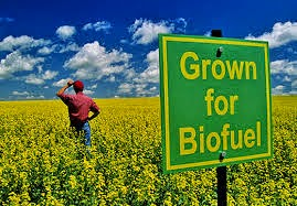 Biofuel is not as GHG friendly as thought...