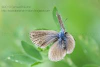 macro insecte nature photographie artistique papillon