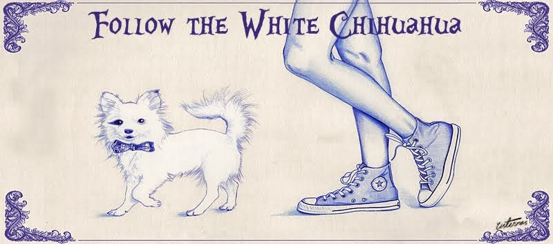 Follow the White Chihuahua
