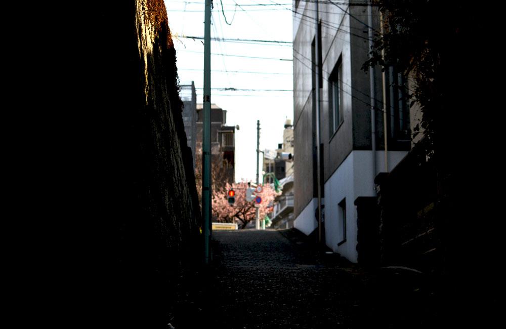 坂道の先に咲く梅の花の写真