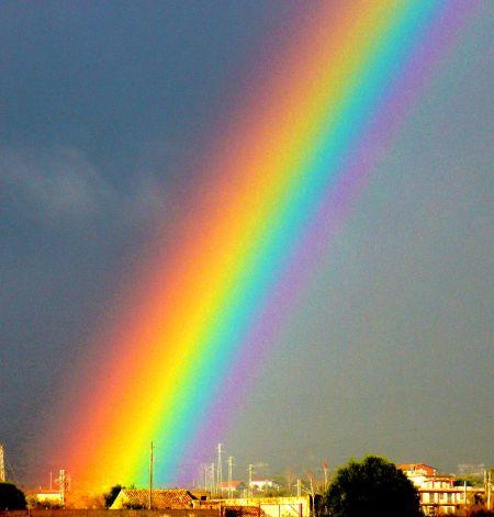 La breda in rete la scatola di einstein - Immagini di gufi arcobaleno ...