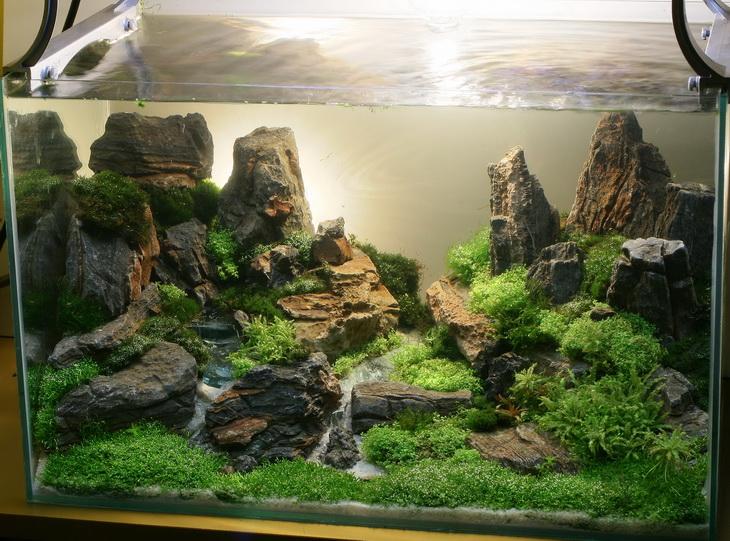 Juragan Mulia Aquascape Pekanbaru Eksotisme Dan Keindahan Alam Dalam Air Pada Aquarium Anda