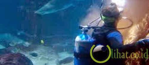 Pembersih Aquarium Hiu