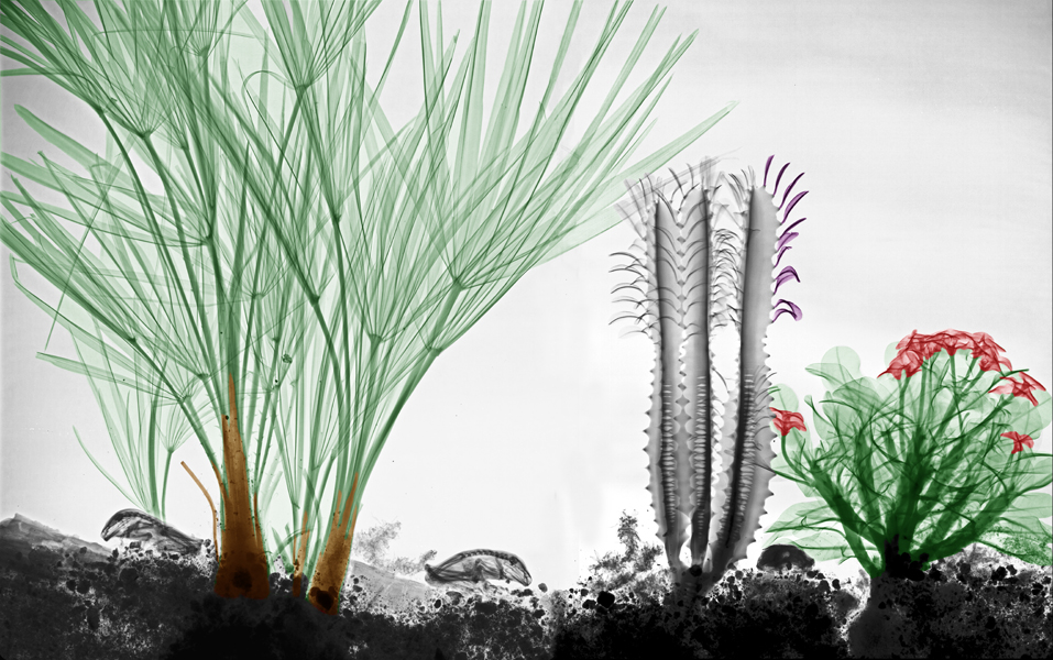 04-Chamaerops-Arie-van-t-Riet-Colored-X-ray-Photographs-of-Nature-www-designstack-co
