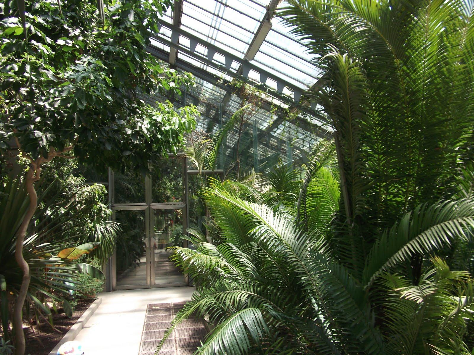 Blognatura jardin botanico de madrid madrid s botanical for Entrada jardin botanico madrid