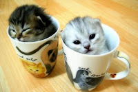 Kitties in Cups cute cats