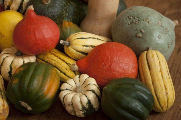 Vialove Foods Not To Put In Your Refrigerator