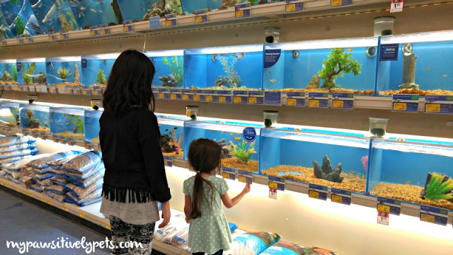 Browsing the fish at PetSmart