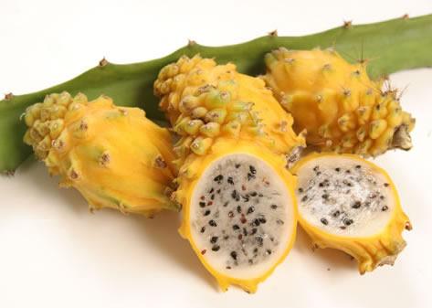 benefits of dragon fruit (Hylocereus undatus)