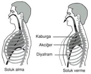 nefes çalışmaları