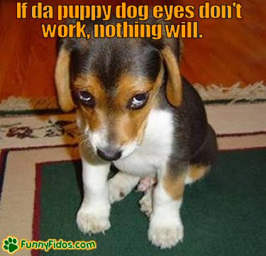 Funny Puppies Pictures
