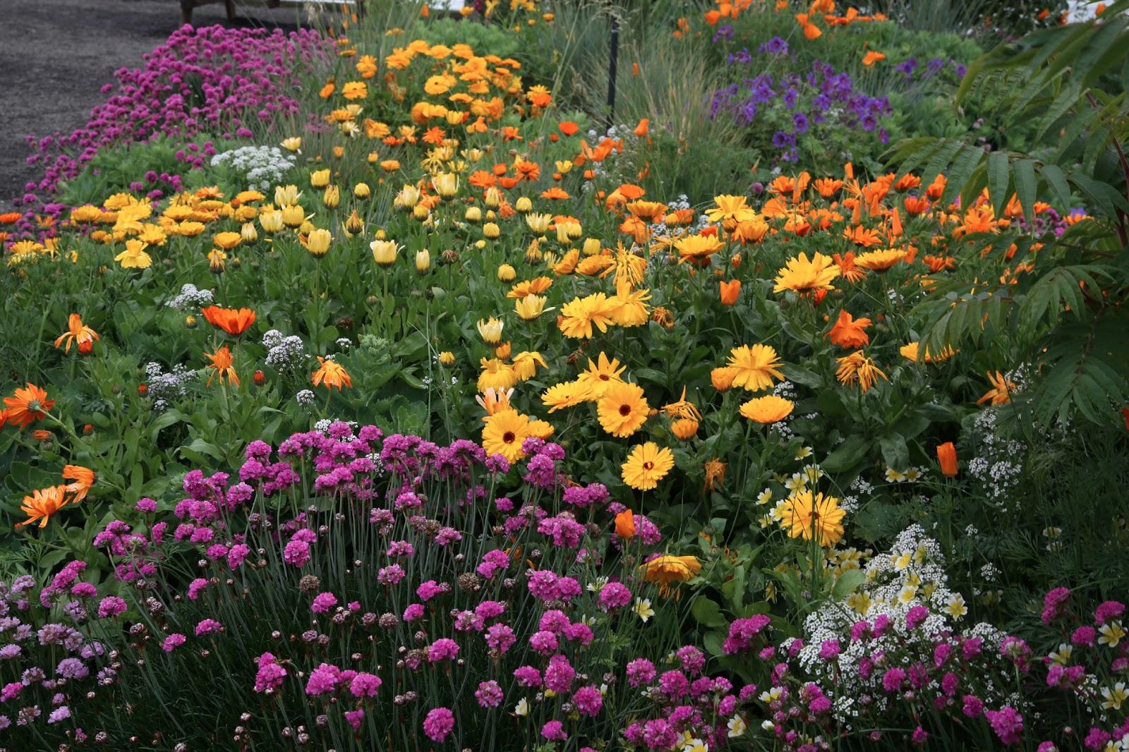 purple and orange flower garden Beverly Ash Gilbert: June 2013