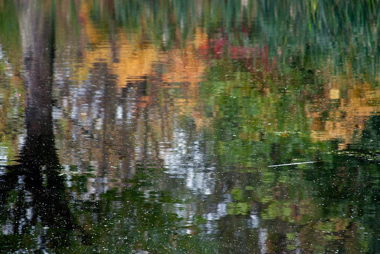 weerspiegeling met boom