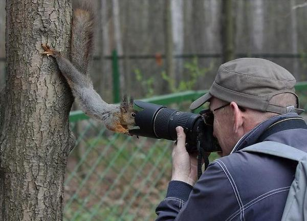 Images Comiques - Page 12 A.aaa-Close-Up-Photo-Of-Squirrel