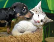Foto divertenti: Foto affettuose cane e gatto